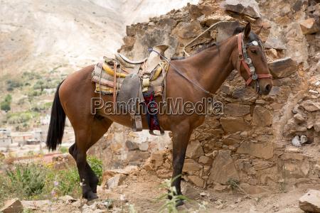 siodlo meksykanskiego konia