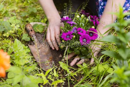 sadzenie kwiatow