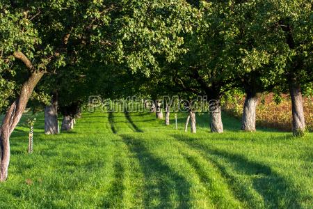 przyroda srodowisko drzewo drzewa kierunek aleja