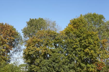 koron drzew lisciastych na brzegu lasu