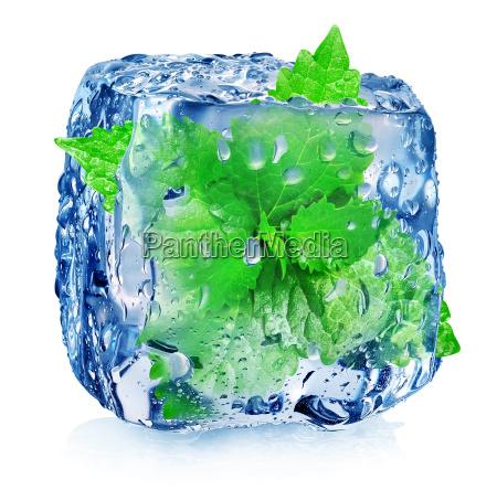 mieta w kostce lodu