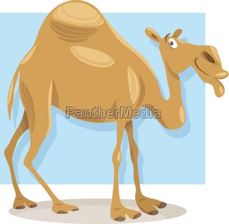 dromader camel ilustracja kreskowka