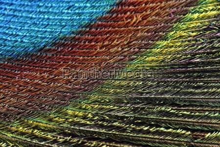 niebieski umowa makro zblizenie close up