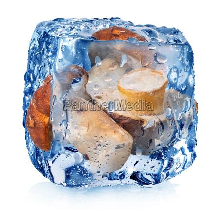 grzyby w kostce lodu