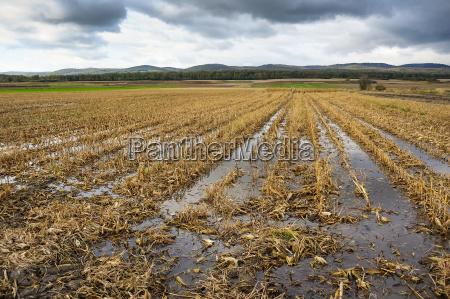 powodzie w kukurydzy po zbiorach