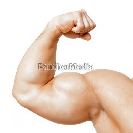 muskularne biceps