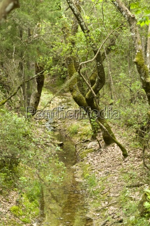 drzewo zielony grecja flora potok strumyk