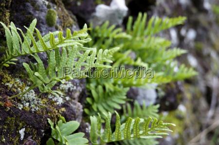 zielony flora hiszpania paproc teneryfa zielone