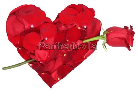serce kwiatow z rose theme love