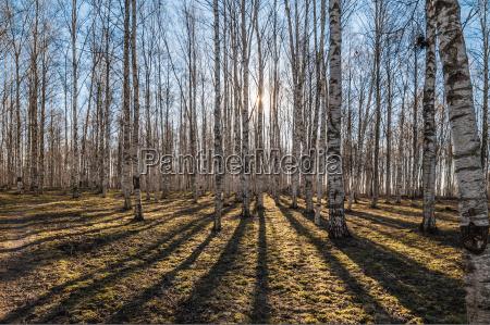 przedmioty przyroda srodowisko drzewo park trunk