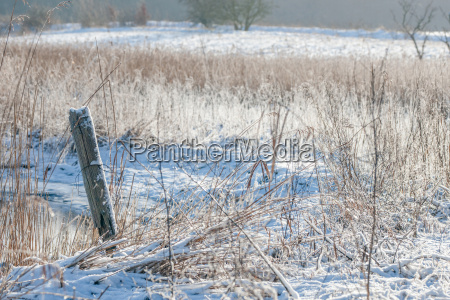 piekny mily przyroda srodowisko drzewo zima