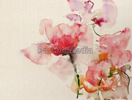 rose ekran akwarela