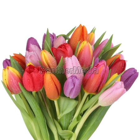 bukiet z tulipanow kwiaty na wiosne