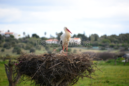 hiszpania gniazdo bociany andaluzja na dachu