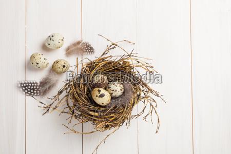 jaja przepiorcze pioro wiosna gniazdo pisanka