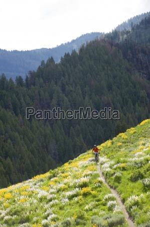 czlowiek na rowerze gorskim w sun