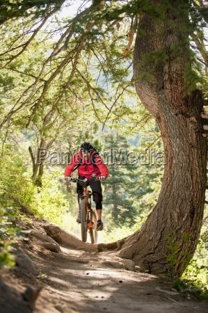 sport sporty drzewo usa na zewnatrz
