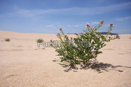 desert wasteland canary islands dune sands