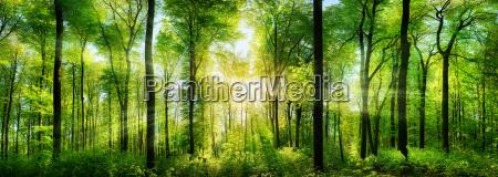 panorama las z promieni slonecznych