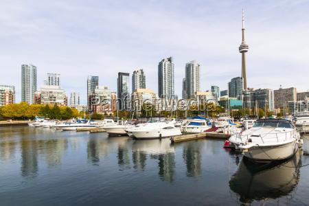 kanada klon wypasc jesien