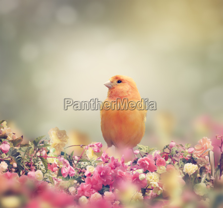 zolty ptak