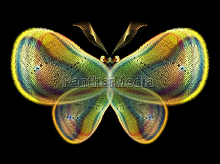 elegancja butterfly