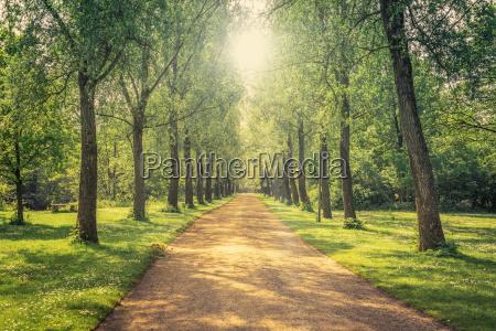 niebieski piekny mily przyroda srodowisko drzewo