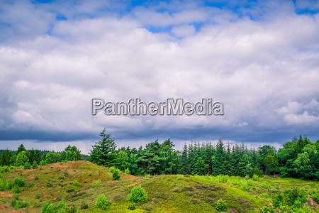 niebieski drzewo drzewa gora anhoehe wzgorze