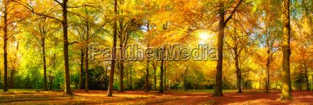 jesieni lasowa panorama w zlotym swietle