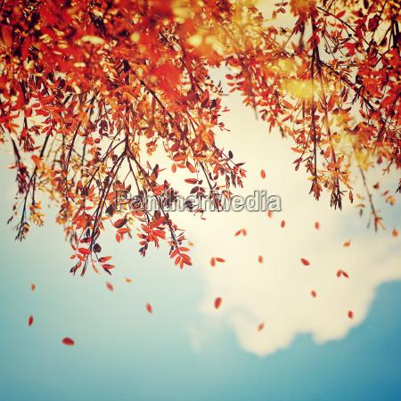 piekny rocznik jesieni tlo
