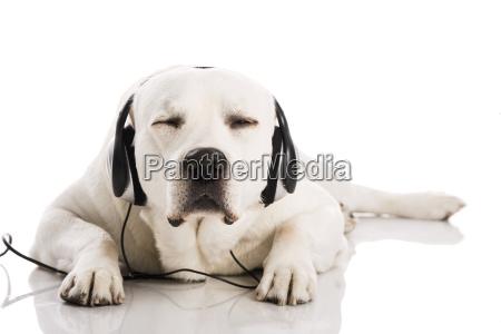 pies i muzyka