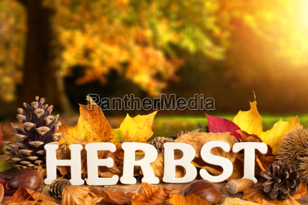 atmosferyczne krajobrazy z jesienia napis