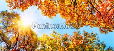 baldachim blekitne niebo i slonce jesienia
