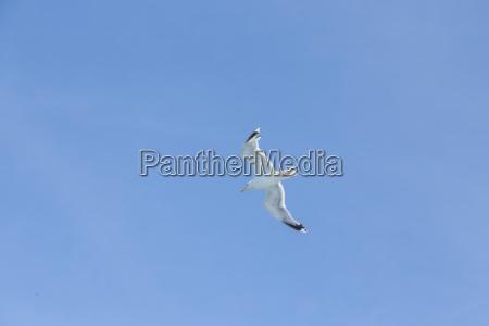 zwierze ptak ptaki morskich morze ocean