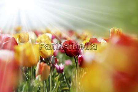 kwiat kwiatek zawod roslina latorosl kolorowe