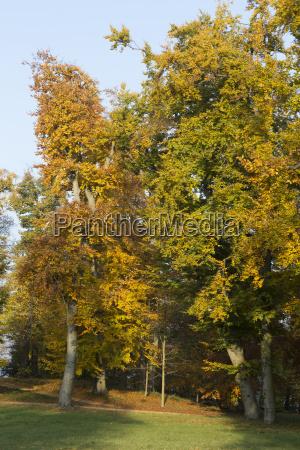 drzewo drzewa liscie pozne lato jesienne