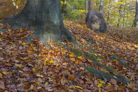 spot swiatla i korzeni drzew