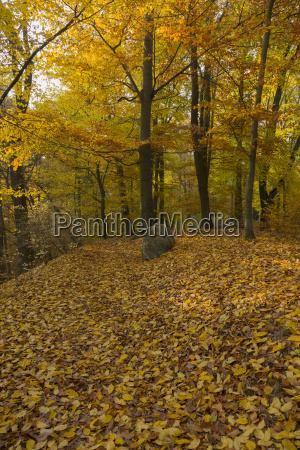 szlak lesny jesienia lisci