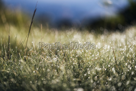 krajobraz w gorach sierra nevada