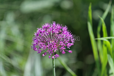 kwiat kwiatek zawod roslina latorosl drzewa
