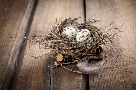 jaja przepiorcze w gniezdzie na drewnianym