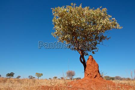 drzewo owad pejzaz krajobraz natura kopiec