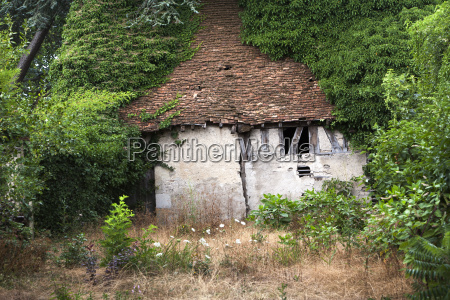 stary opuszczony budy porosniete drzewami