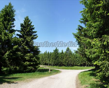 widly drogowe w lesie turynskim
