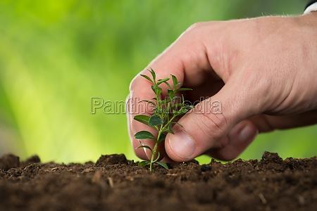 osoba reka sadzenia male drzewo