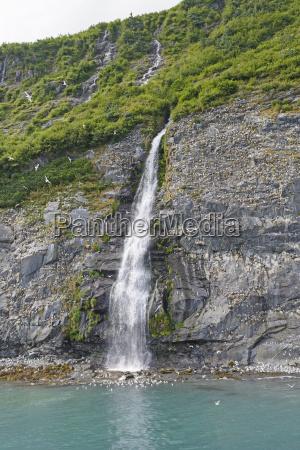 rookery kittiwake przez odlegly wodospad