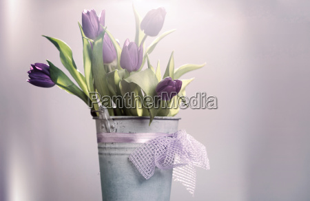 rozowe tulipany w wiadrze retro