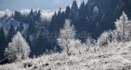 szron objetych zimowy krajobraz