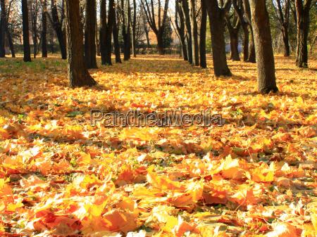 lisc drzewo park pazdziernik listopad wypasc