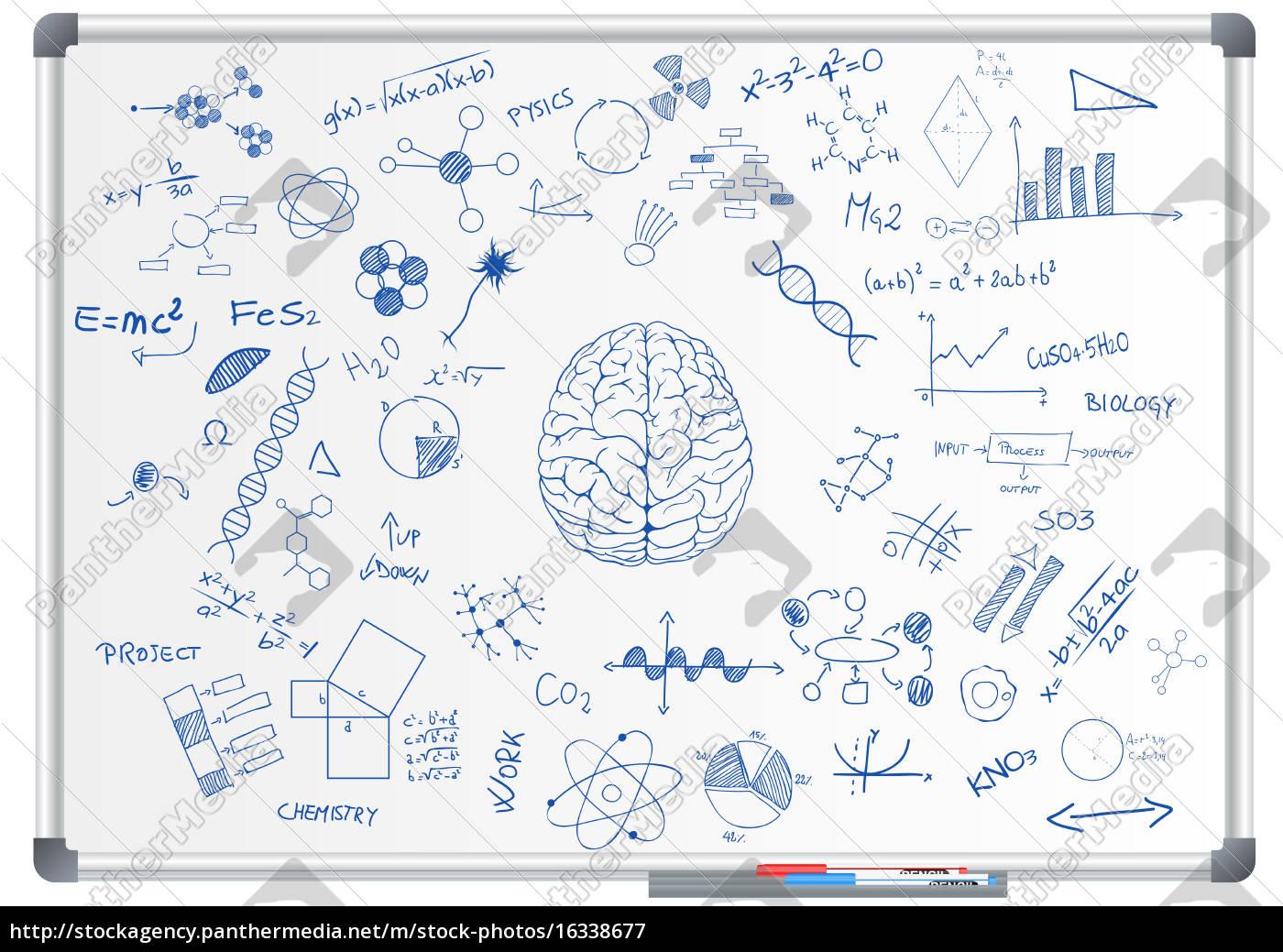 kreda, do, nauki, o, mózgu - 16338677